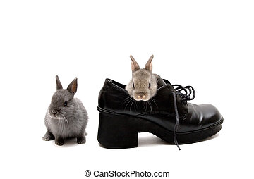 Two and a Shoe - Two Netherland dwarf bunnies and a shoe on...