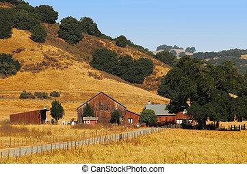 Summer Farm - A farm in central California