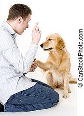 perro, entrenamiento