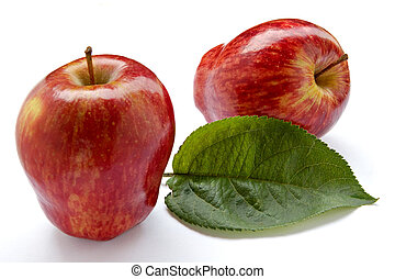 Rich apple crop-fruits and foliage