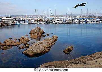 Monterey Bay - A pelican flying over the Monterey Bay,...