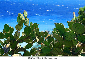 cactus and sea - cactus plants with the Mediterranean...