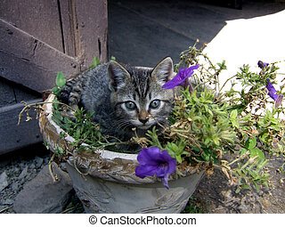 Kitten in Flower Pot - Kitten in flower pot outside barn