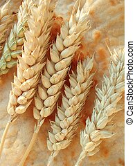 Bread - Close-up of wheat corn on a peace of baked handmade...