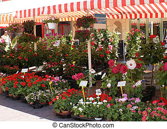 flower market - Flower market in old Nice, France
