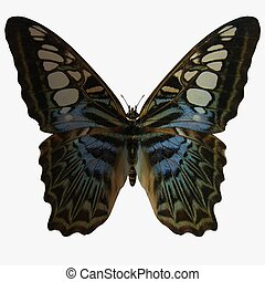 Butterfly-Clipper - 3D Animal