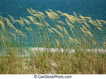 Sea Oats on Wrightsville Beach