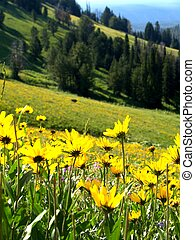 Hillside Flowers - Flowers on a mountain with trees in the...