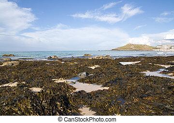 Seaweed Rocks - Rocks on the shore covered in seaweed
