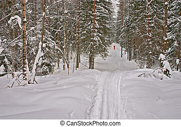 Winter Forest. Skier - Russia. Saint-Petersburg. Winter...