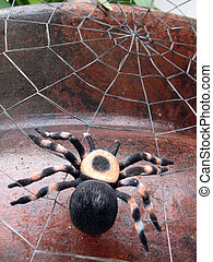 Spider - Shot of a spider (tarantula), on its spiderweb....