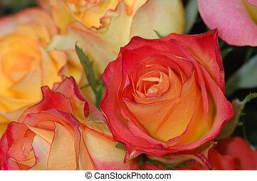 laranja, vermelho, rosas