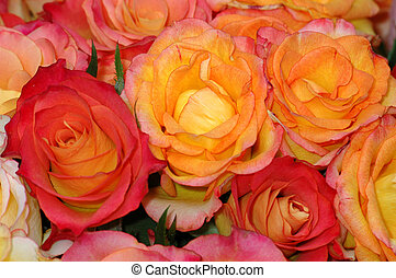 Orange, yellow and red roses