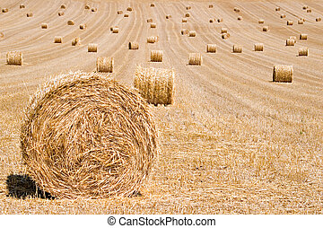 Hay Bales - Hay bales on harvested field waiting to be...
