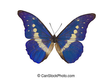 The Blue Butterfly 2 - blue butterfly isolated on a white...