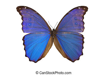 The Blue Butterfly 3 - Blue butterfly isolated on a white...