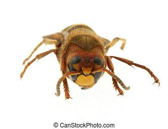 大黃蜂, -, 極端, Mac