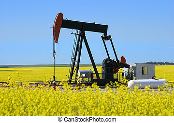 Pump Jack in Canola - A pump jack in a canola field in...