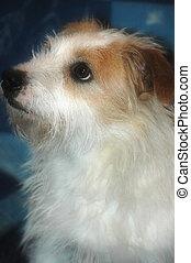Photo dog