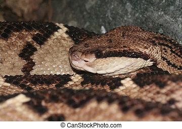 Bushmaster, serpent