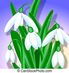 Snowdrops - Close-up - Close-up of snowdrops Digital...