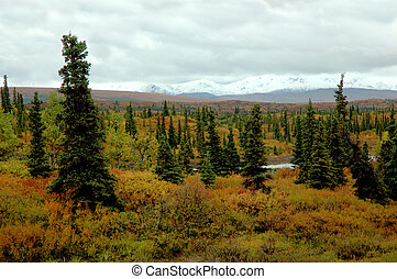 Alaskan Landscape - Alaskan landscape showing fall colors...