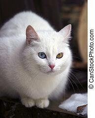 portrait, chat, différent, yeux
