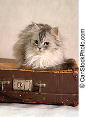 Cat on a suitcase - The studio image of a cat sitting on an...