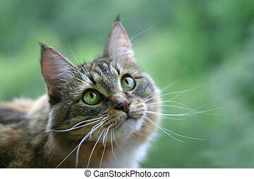 Cat with green eyes on a green background