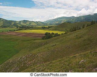Vivid fields - Russia. Altay