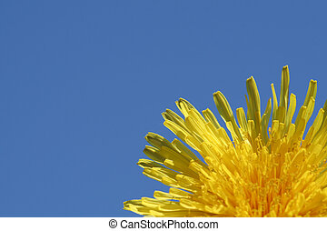 Dandelion and blue sky