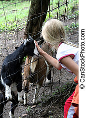 In the zoo  - Little girl feeding goats. Zoo