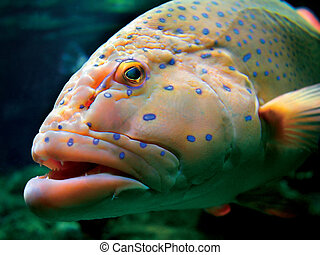 Big tropical fish - Large exotic tropical fish swimming in...