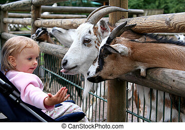 In the zoo - Little baby and goats. Zoo. Nuremberg.