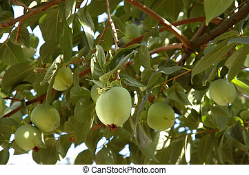 Over-laden fruit tree - An over-laden fruit tree