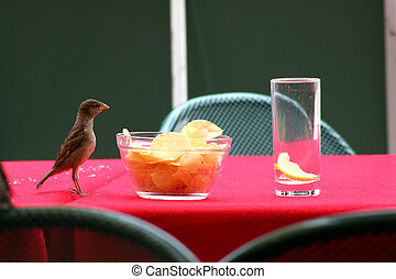 Sparrow - Digital photo of a sparrow in an outdoor cafe...