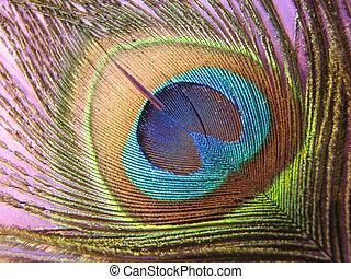 peacock feather eye - Macro of peacock feather