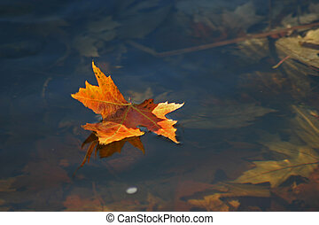 Floating Leaf - A floating leaf in the Ottawa River.