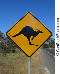 Beware of kangaroos - Australian native animal kangaroo road...