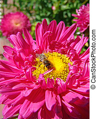 bee on the flower - the bee on the flower