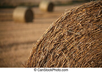 Straw - Bundles of straw on a field in late summer