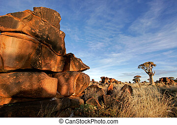 Quiver tree landscape - Desert landscape at sunrise with...