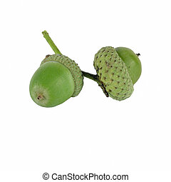 acorn on white background - OLYMPUS DIGITAL CAMERA acorn...