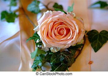 Rose - an orange rose