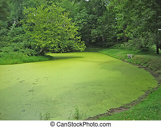 Algae - Pond with thick algae