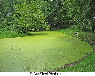 Algae!!!