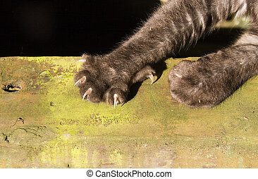 Claws - A cat stretches its claws in a sunny spot