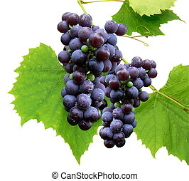 Black grape with leaf - isolated