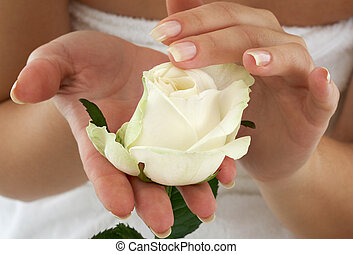 rosebud - beautiful woman hands with rosebud