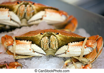 Dungeness crab - Seafood row in Seattles Pike Place market...